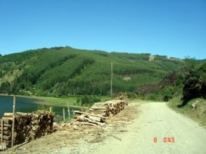 Destruction of the native Forests in the Valdivia region.